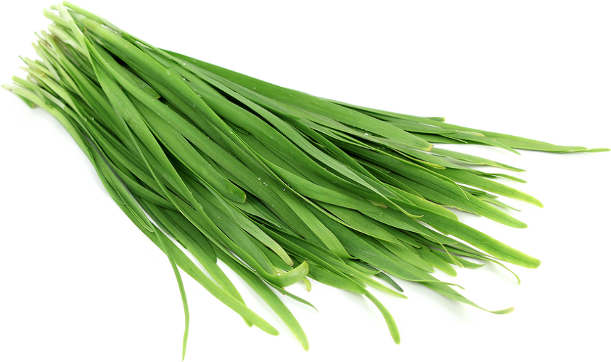 garlic-chives-garlic-chives-information-recipes-and-facts